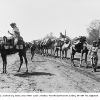 A camel train: beasts of burden in hot dry areas
