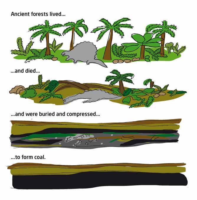 Diagram showing ancient forests changing form into coal