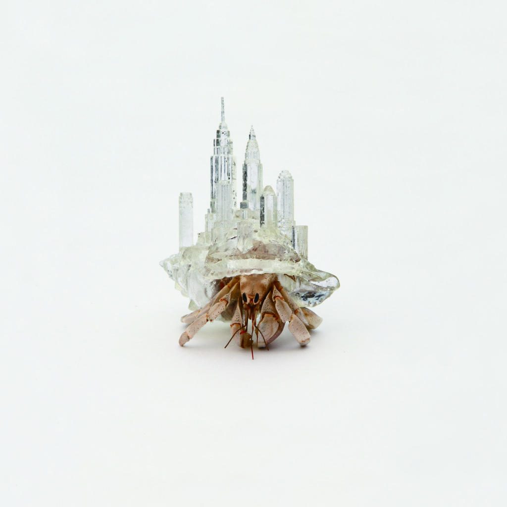 Why Not Hand Over a 'Shelter' to Hermit Crabs? Series by Aki Inomata, 2009-16. © Aki Inomata courtesy of Maho Kubota Gallery.