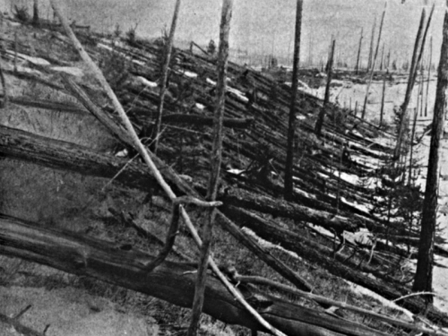 Black and white photograph showing a forest of trees which have been flattened.