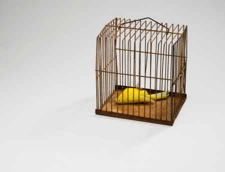 Dead bird in a cage