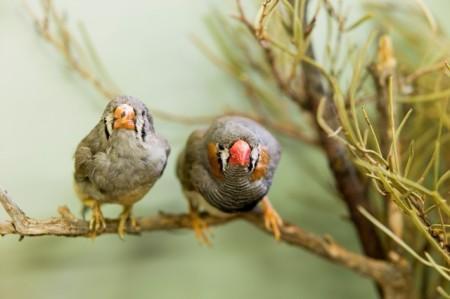 Two bird on a branch