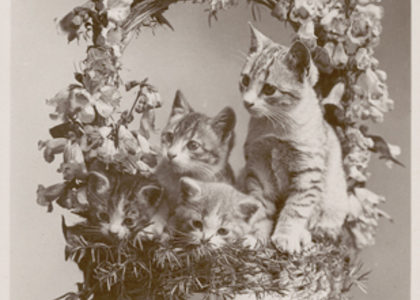 Postcard of cats in floral basket