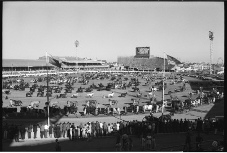 Photograph of The Grand Parade, Royal Easter Show 1964