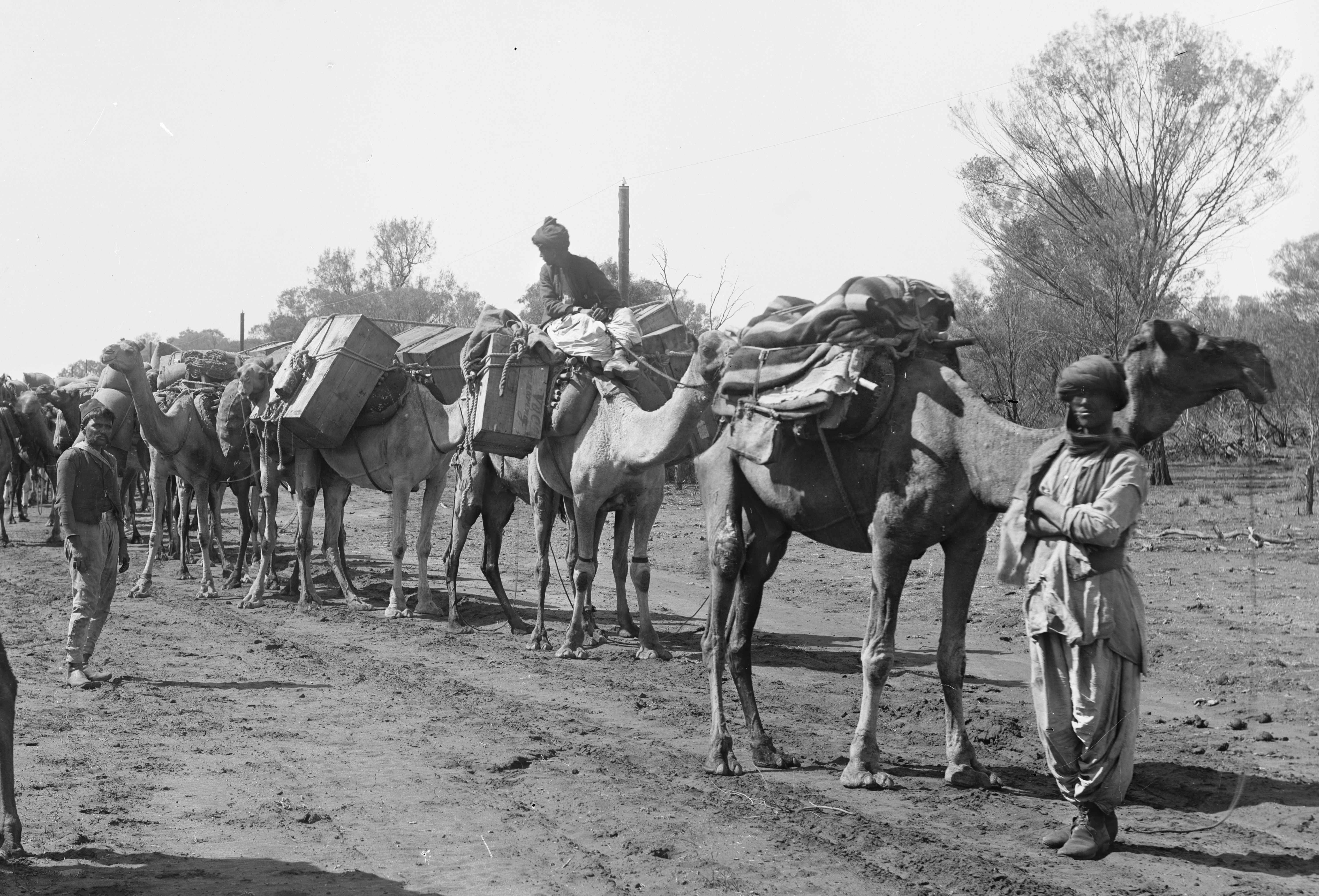 """7b38521eeb7 Making a nation  """"Afghans"""" and their camels for Australian inland ..."""