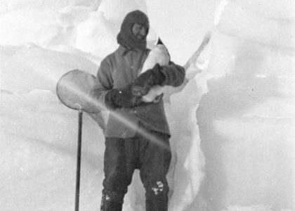 Charles Laseron catches an early penguin arrival in Spring, photograph by Archibald Lang Mclean, Cape Denison (Antarctica), 1911-14, State Library NSW collection