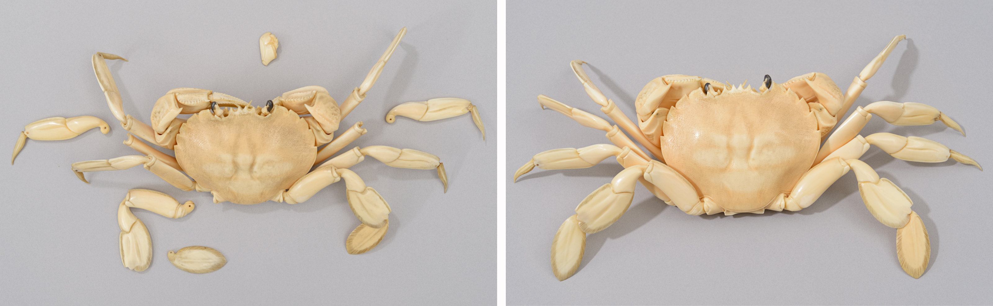 Left: top view of the crab with ivory covered with a layer of dust and dirt, and four sections of legs and one part of mouth detached. Right: top view of the crab after cleaning and repairs: the ivory has regained its natural warm colour and lustre